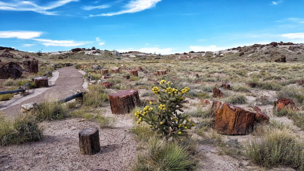 Parques Nacionales EEUU: Petrified Forest