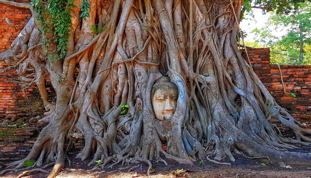 Guía de Tailandia: Buda en el árbol de Ayutthaya