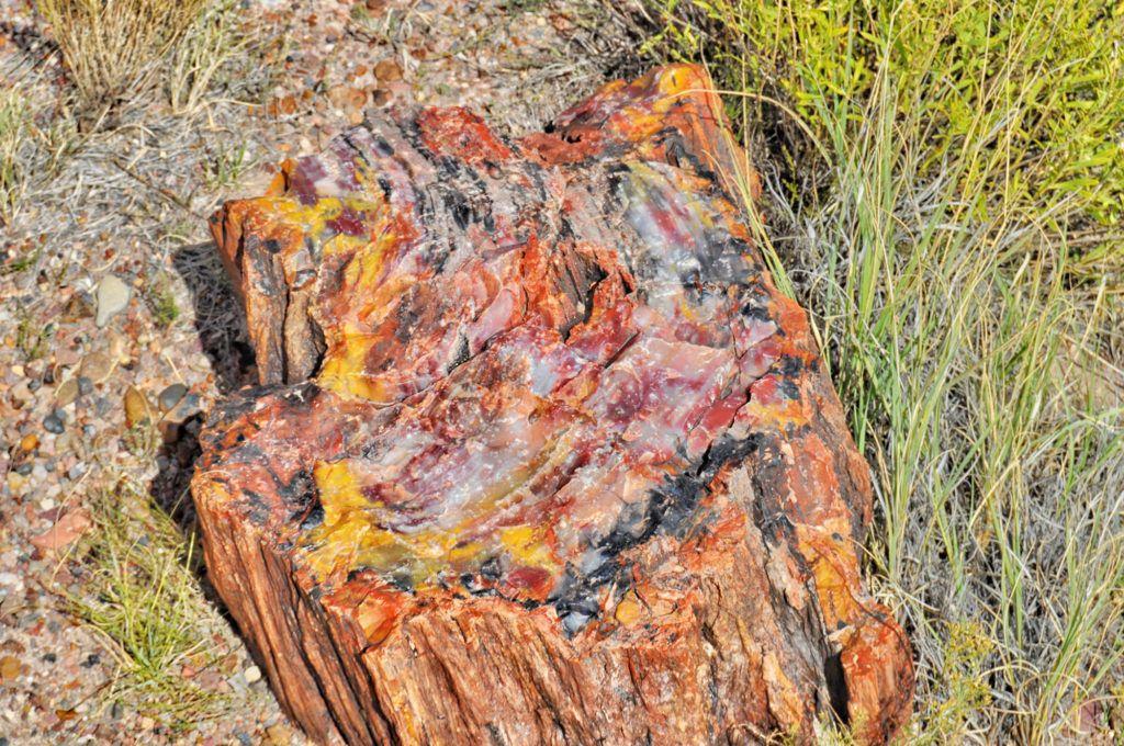 Etapa 8 de la Ruta 66: Petrified Forest