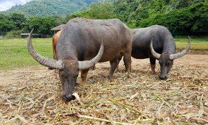 Estamos EN CONTRA del turismo que fomenta maltrato animal