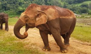 15 consejos para viajar a Tailandia [VÍDEO]