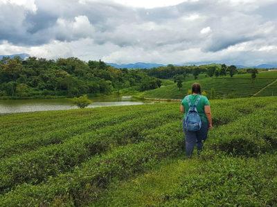 Cómo ir de Chiang Mai a Chiang Rai