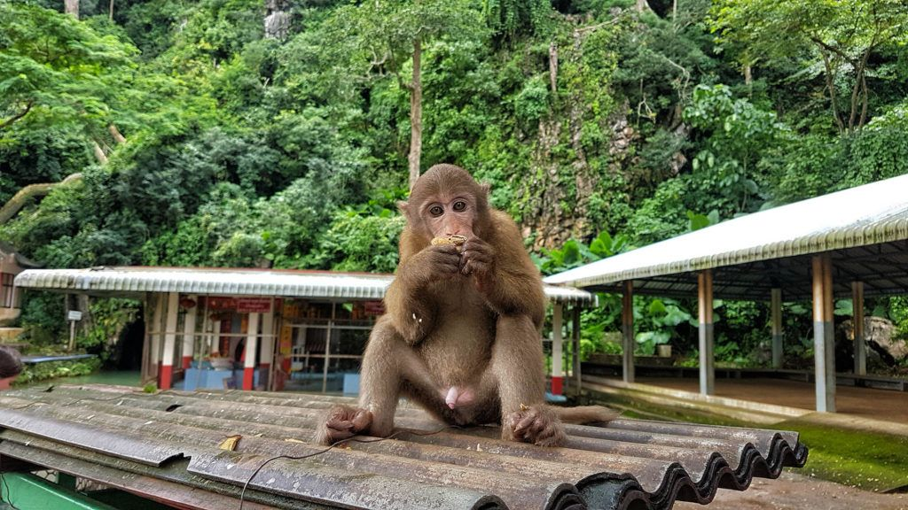 Qué ver en Chiang Rai: Monkey Cave