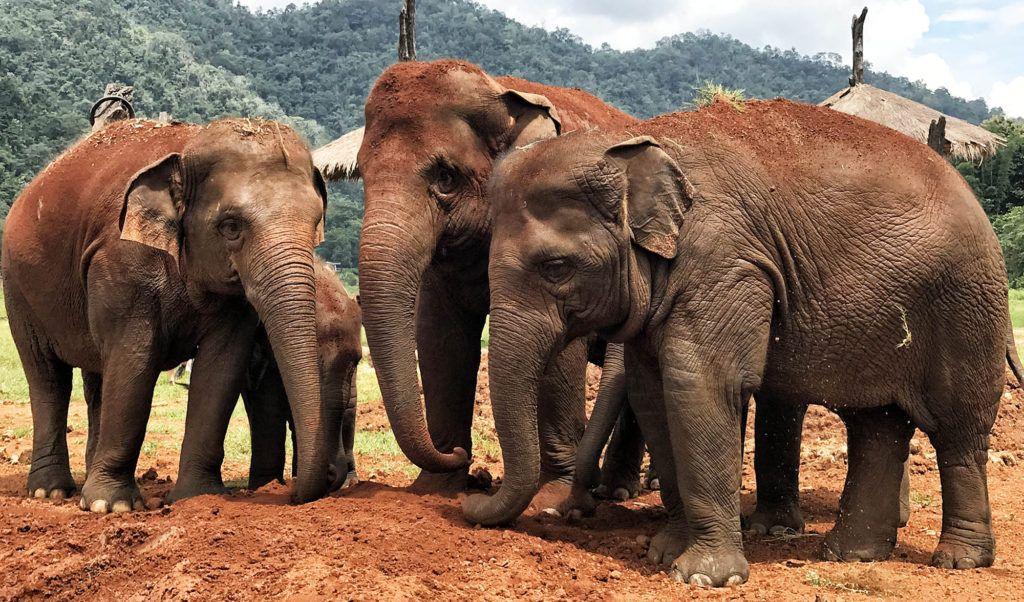 consejos para viajar a Tailandia elephant nature park cuanto cuesta un viaje a tailandia