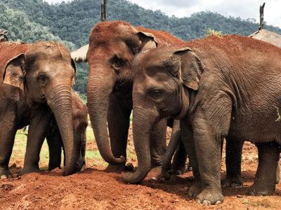 Un día en Elephant Nature Park [VÍDEO]