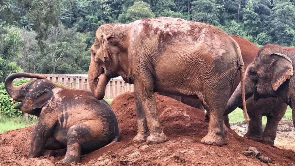 Elephant Nature Park - Mejor seguro de viaje para Tailandia
