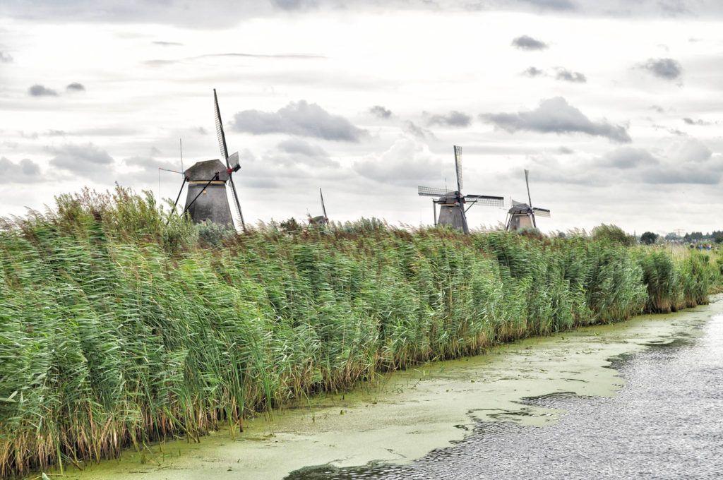 Viaje en autocaravana por Europa: Molinos de Kinderdijk