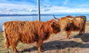 Ruta por Escocia en coche: 8 días en las Highlands