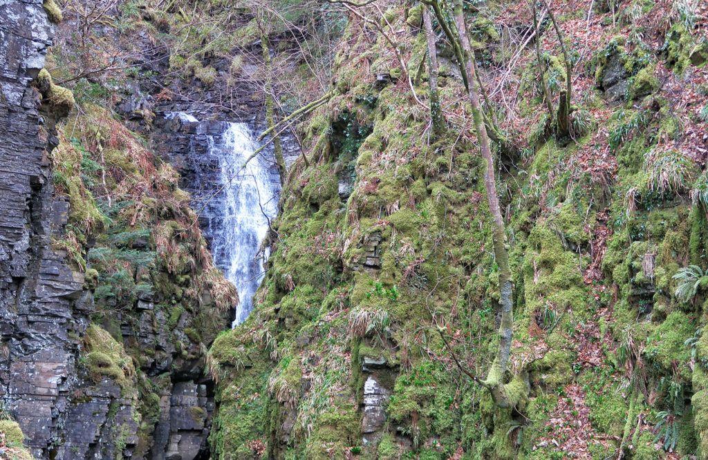 Ruta por Escocia en coche: Leal Forest Garden