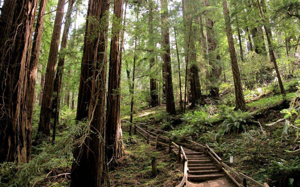 Qué ver en San Francisco: Muir Woods