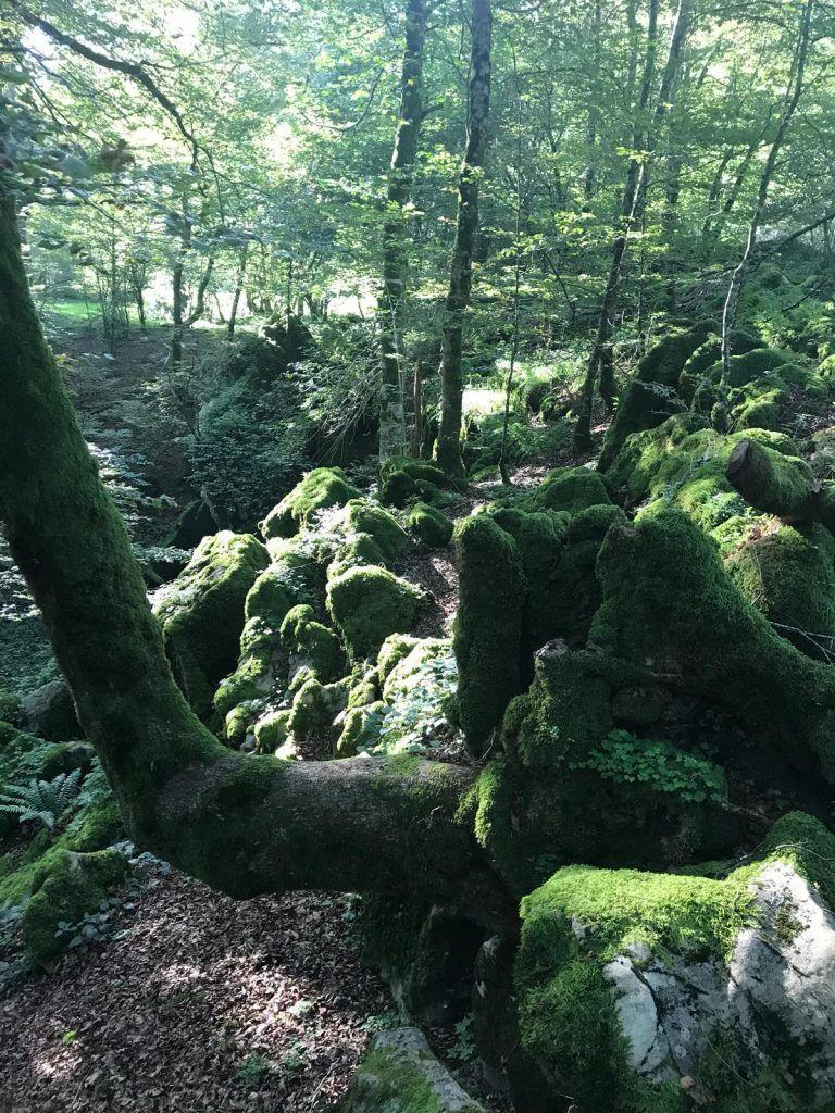 Montaña de Navarra: Selva de Irati