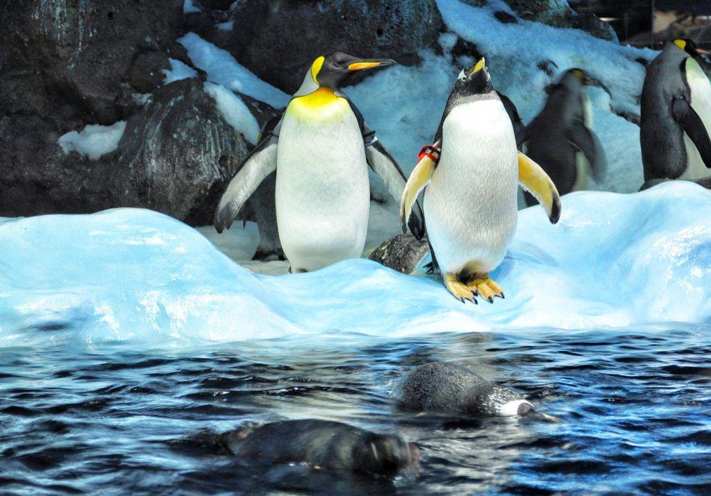 Tenerife en una semana: Pingüinos en Loro Parque