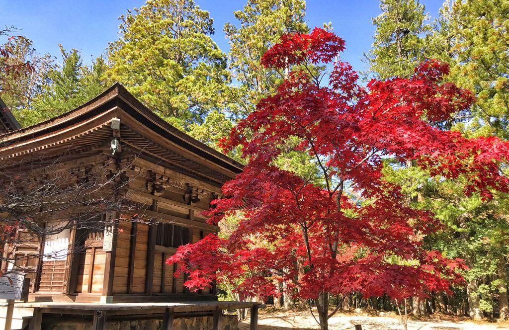 Guía de Japón: Koyasan
