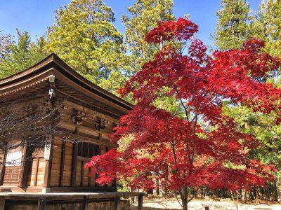 ¿Cuánto cuesta un viaje a Japón? Presupuesto para 21 días [VÍDEO]