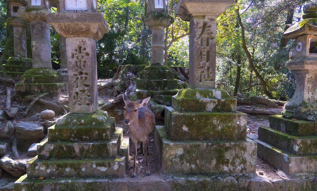 Cómo ir de Kioto a Nara