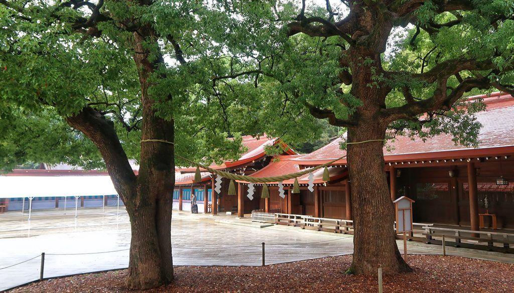 Qué ver y hacer en Harajuku: Santuario Meiji - imprescindibles en Tokio