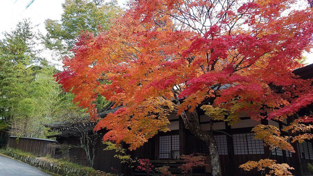Cómo ir de Shirakawago a Takayama