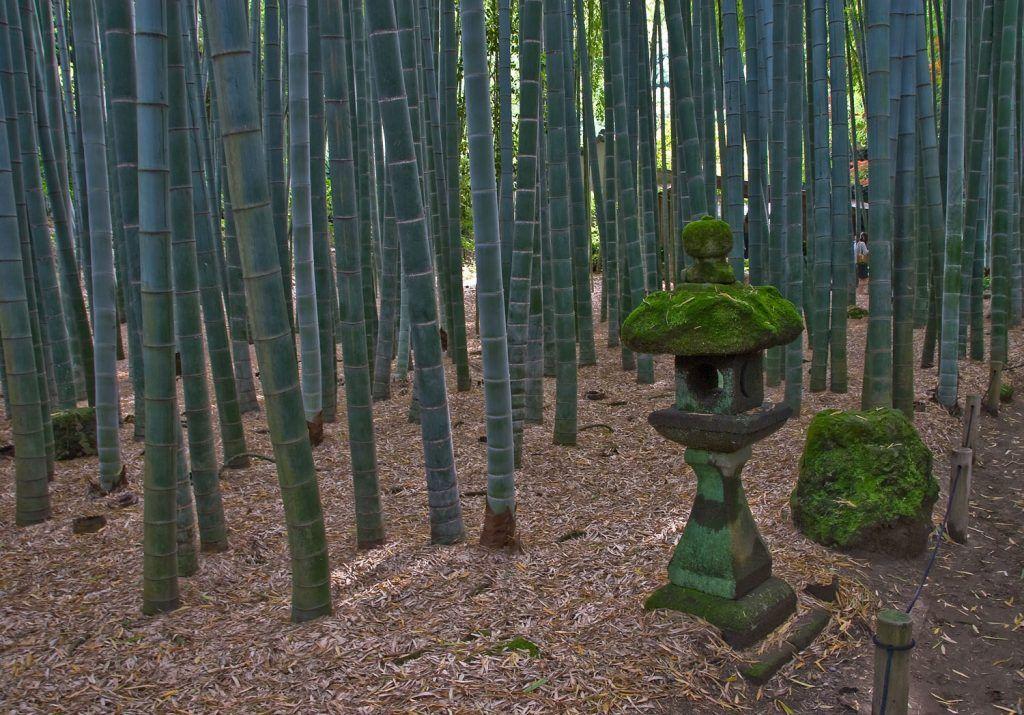 Qué ver en Kamakura: Templo Hokokuji