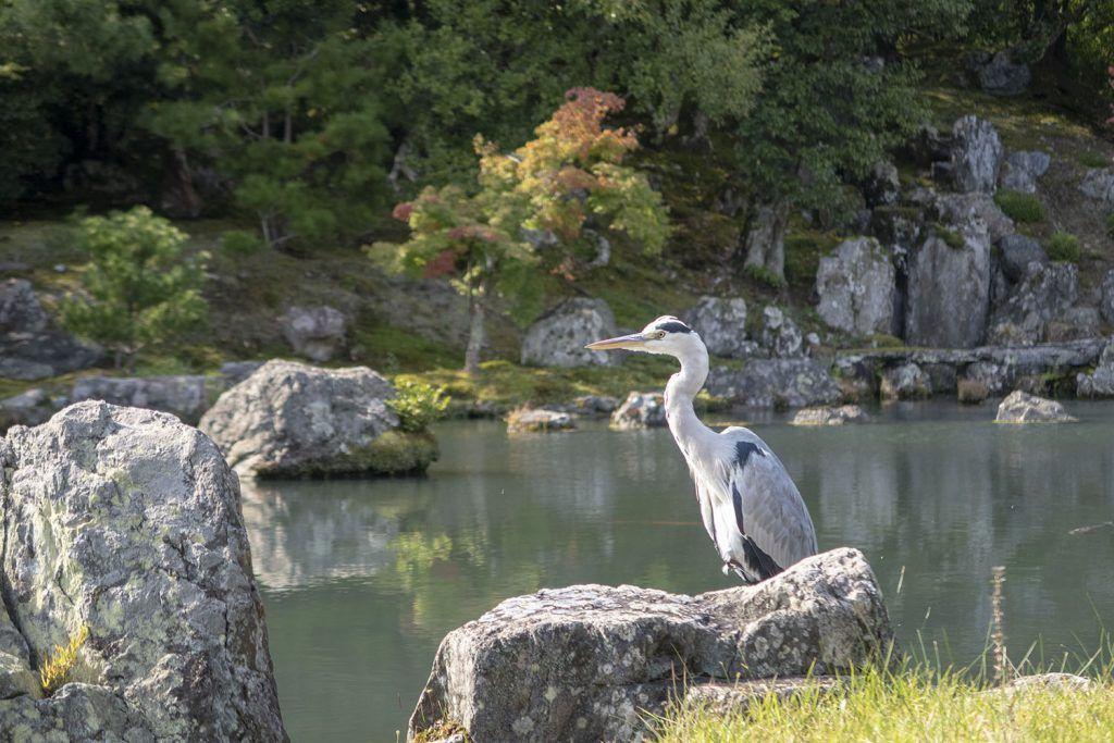 Qué ver en Kioto: Tenryu-ji - dónde dormir en Kioto