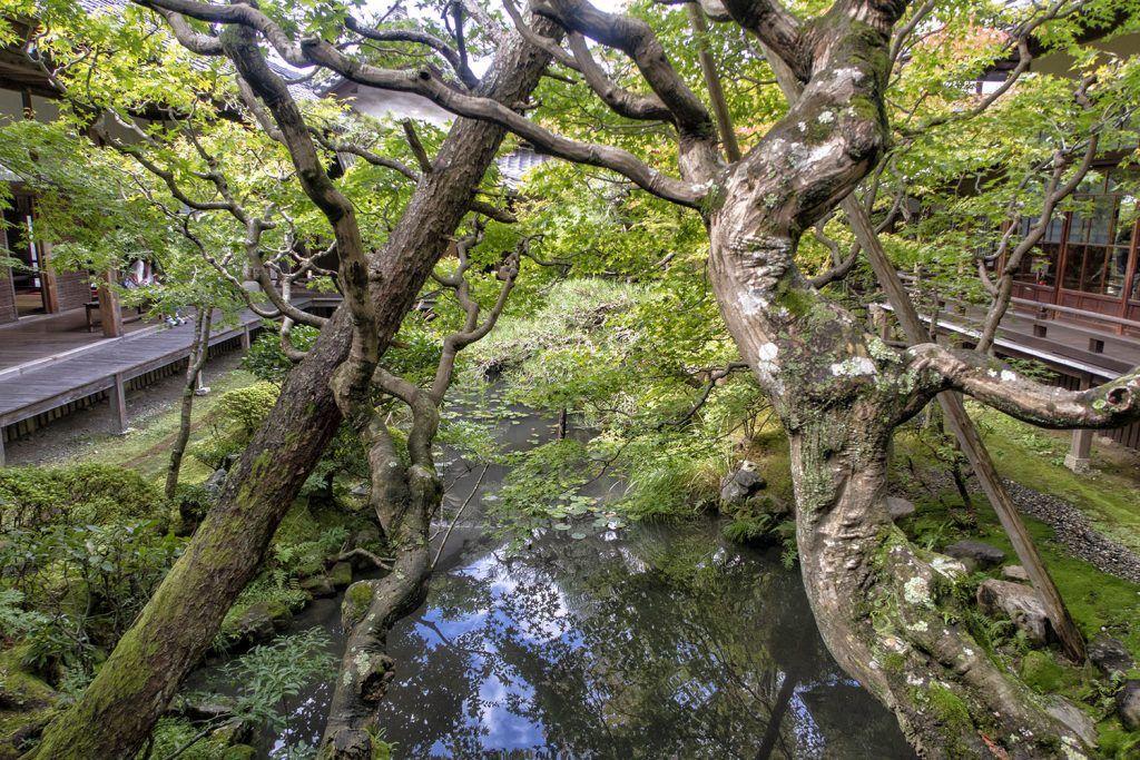 Qué ver en Kioto: Eikan-do