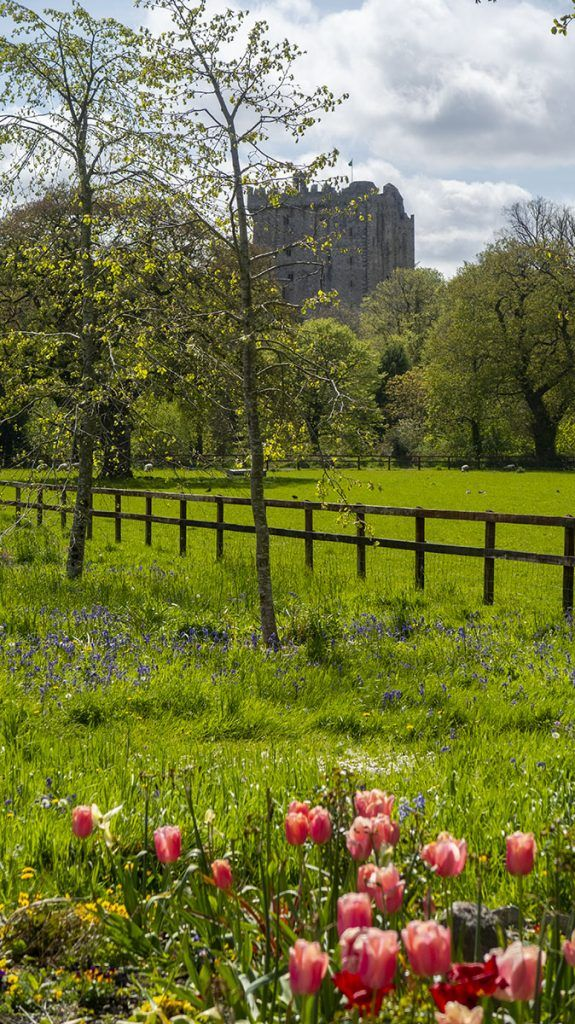 Segunda etapa de nuestra ruta por Irlanda: Blarney Castle