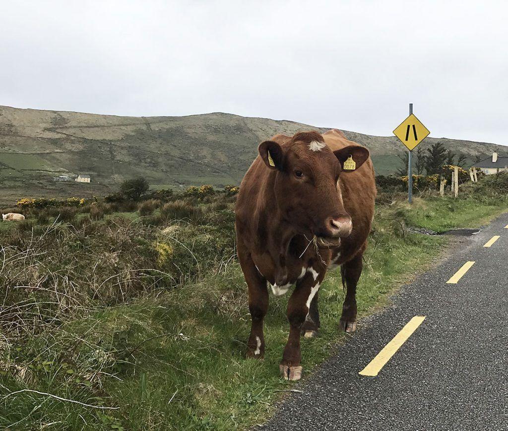 Tercera etapa de nuestra ruta por Irlanda (Ring of Kerry) - Las mejores rutas en coche del mundo: irlanda