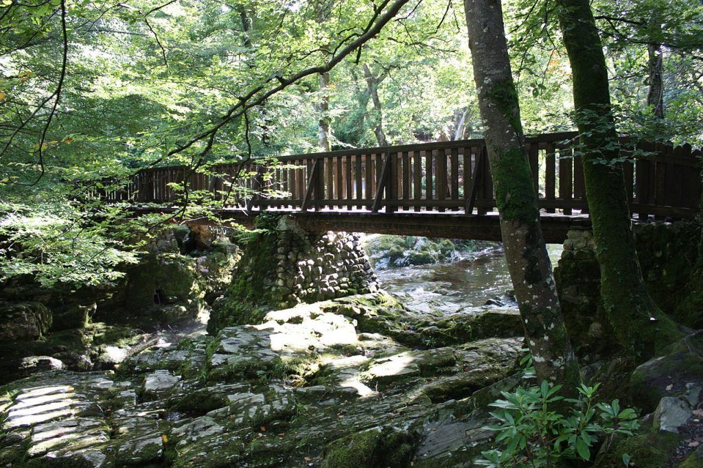Octava etapa de nuestra ruta por Irlanda: Tollymore Forest Park