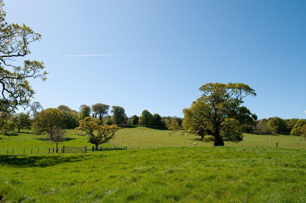 Octava etapa de nuestra ruta por Irlanda: Invernalia en Castle Ward - consejos para viajar a Irlanda