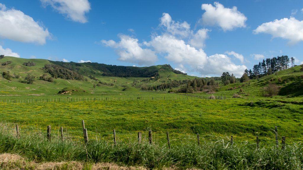 Etapa 2 por NZ entre Hamilton y Taumarunui: State Highway 4