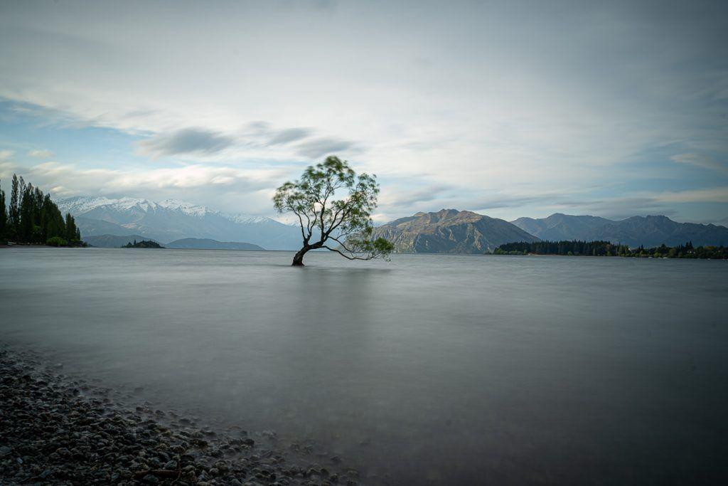 Ruta por Nueva Zelanda: Wanaka Tree