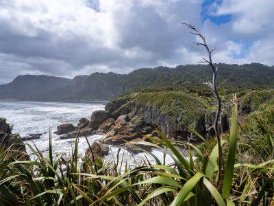 25 curiosidades de Nueva Zelanda que SEGURO que no sabías