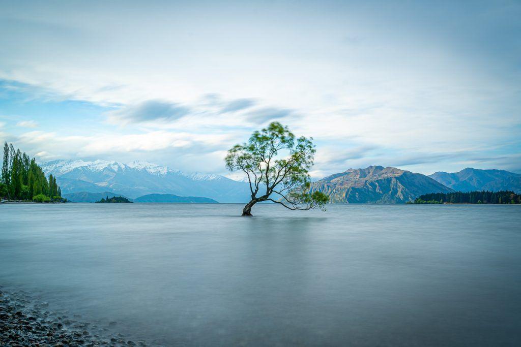Etapa 7 por NZ desde Haast a Wanaka: Wanaka Tree