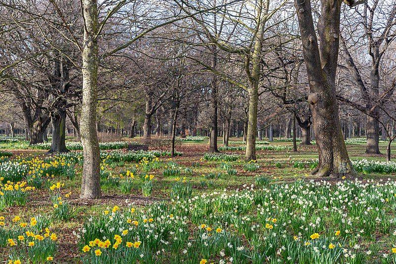 Qué ver en Christchurch: Hagley Park