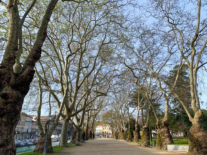 Qué ver en Oporto: Jardim do Cordoaria - barrios de oporto