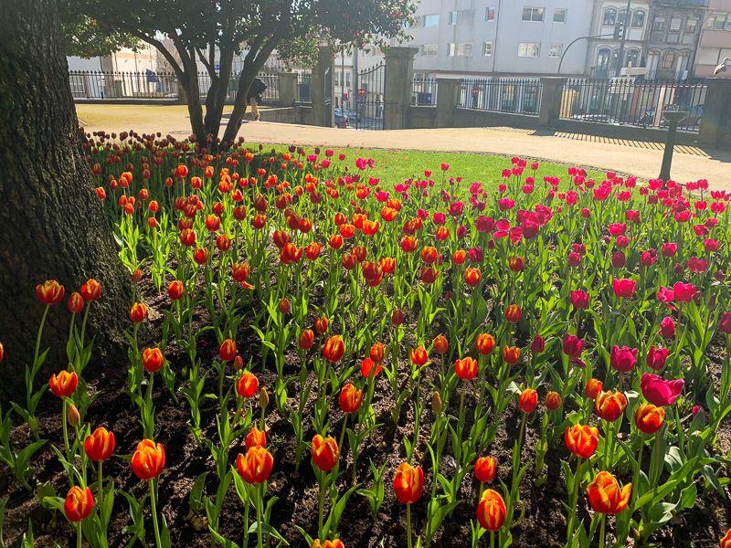 Qué ver en Oporto: Jardim de Marques de Oliveira