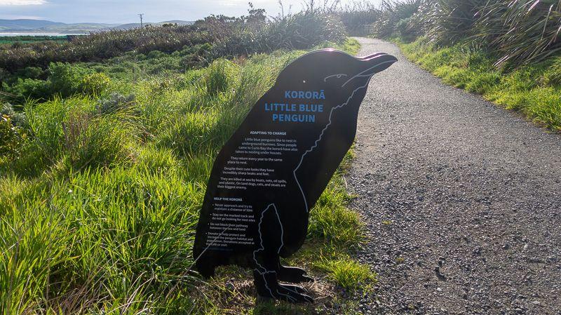Etapa 11 por NZ desde Slope Point a Nugget Point y el Monte Cook: Curio Bay