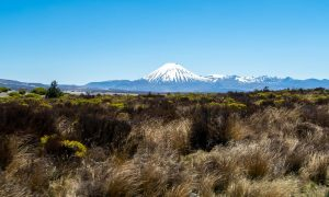 Ruta por NZ | Etapa 16: Wellington – Camino del Tongariro [MAPA + QUÉ VER + VÍDEO]