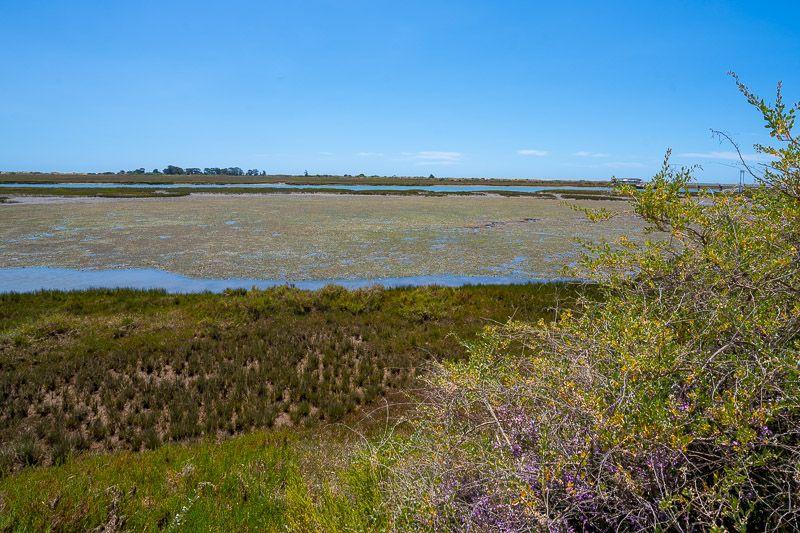 Qué ver en el Algarve: Parque Natural da Ria Formosa