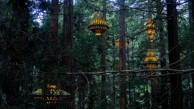 Etapa 18 por NZ entre Taupo y Rotorua: Redwoods Treewalk - qué hacer en Rotorua