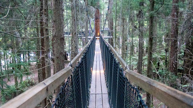 Etapa 18 por NZ entre Taupo y Rotorua: Redwoods Treewalk
