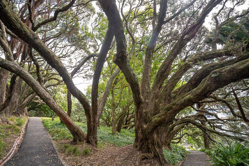 Qué hacer en Auckland: visitar Albert Park