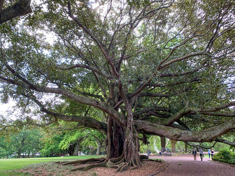 Qué hacer en Auckland: pasear por Albert Park