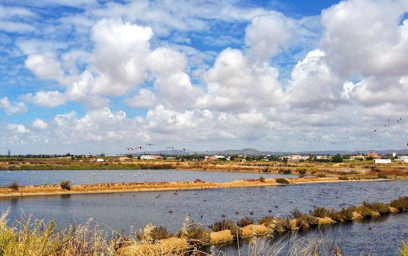 Qué ver en Faro: Parque Natural da Ría Formosa