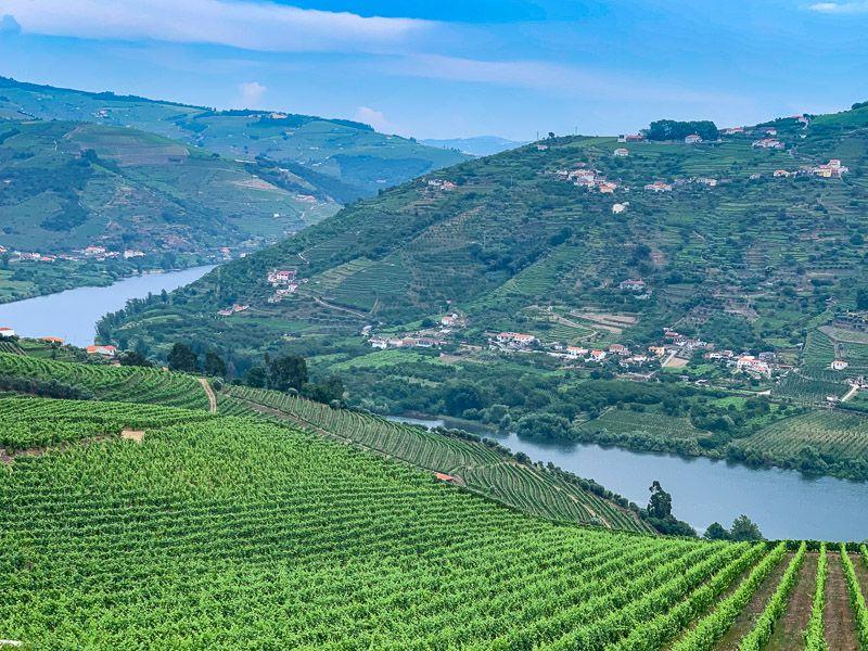 Visitar una bodega en Oporto: ¿cuál es el origen de este vino? - imprescindibles en portugal