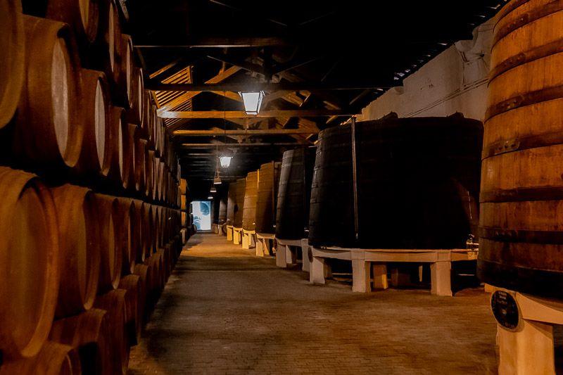 Visitar una bodega en Oporto: ¿de verdad merece la pena?