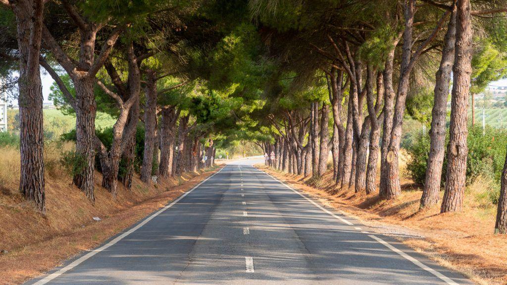Etapa 5 de la ruta por la N2 entre Ferreira do Alentejo y Faro: carretera entre árboles - Dónde dormir en la ruta por la N2