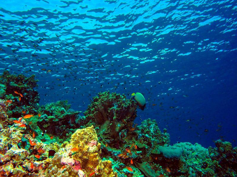 Qué hacer en Áqaba: practicar submarinismo