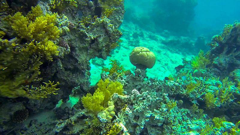 Qué hacer en Áqaba: hacer snorkel en South Beach