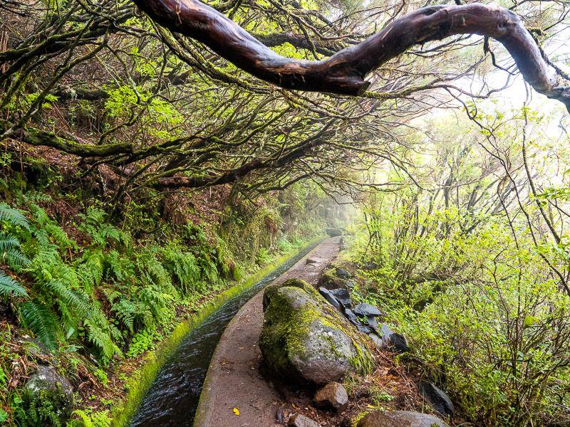 Qué ver en Madeira: levada do Alecrim