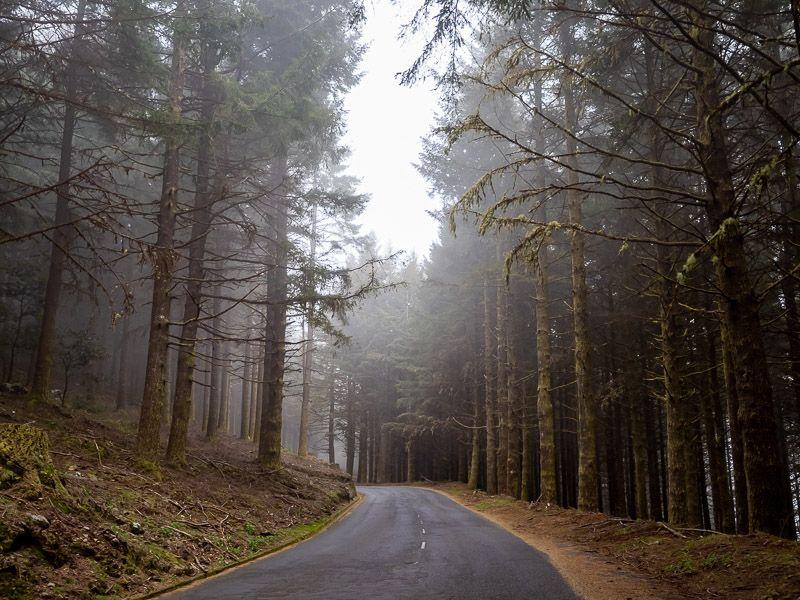Qué ver en Madeira: Ribeiro Frio
